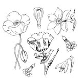 Flowers in black ink. Poppy narcissus crocus anemone weigela galanthus. Art illustration