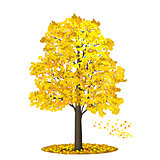 detached tree linden with red and yellow leaves on a white backg