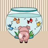 Cute pig looking for globe aquarium with little fishes