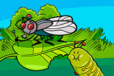fly and caterpillar cartoon insect characters