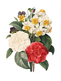 Bouquet of camellias daffodils and viollets | Redoute Flower Ill