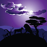 African Night with Lion