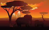 African Sunset with Elephant