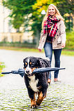 Dog carrying umbrella of his mom in autumn walk