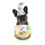 happy birthday dog and cake
