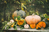 Organic raw pumpkins in an autumn garden.