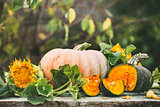 Organic raw pumpkins