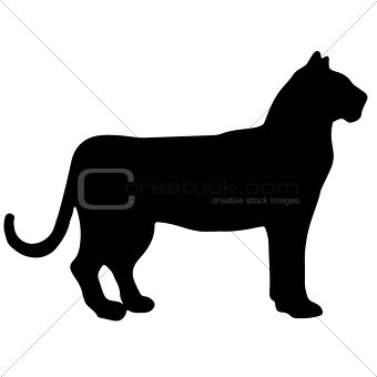 tiger black and white vector silhouette