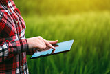 Female farmer using tablet computer in rye crop field