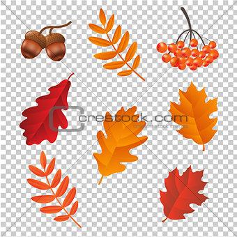 Autumn Set lsolated