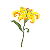 Vector realistic vivid yellow lily on white