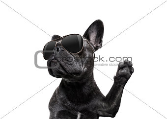 posing dog with sunglasses high five