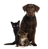 Cats and dog sitting, isolated on white