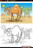 cartoon camel on desert coloring book