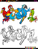 cartoon parrots characters coloring book