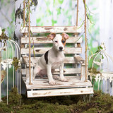 Jack russel terrier sitting, in pastoral decoration