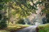 Autumn sunlight rays through the misty trees