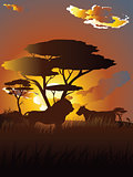 African Sunset with Lion