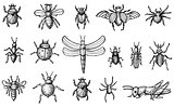 Insects Set with Beetles, Bees and Spiders Isolated on White Bac
