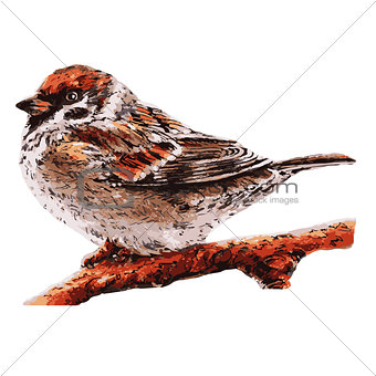 small sparrow on the tree. Bird illustration