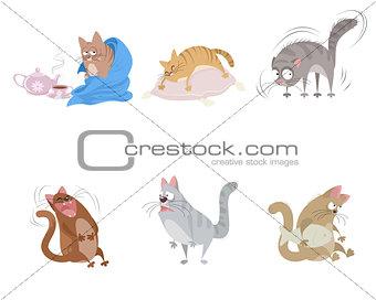 Six funny cats
