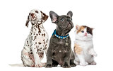 Group of kitten and puppies sitting, isolated on white