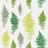 Fern Leaf Vector Fern Leaf Vector Seamless Pattern Background Il