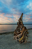 Natural Driftwood at Birch Bay State Park
