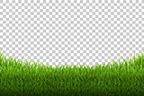 Grass Panorama Transparent Backgrund