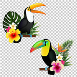 Toucan Collection