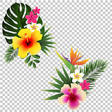 Tropical Flower Set Transparent Background