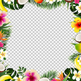 Tropical Frame Isolated