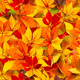 Autumn Seamless Leaves
