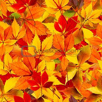 Autumn Seamless Leaves