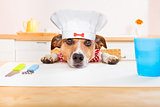 chef cook dog in kitchen