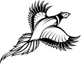 vector illustration of a stylish monochrome flying pheasant