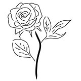 Red Rose isolated on white, vector illustration