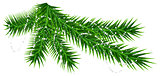 Green pine fir branch and rare snow snowflake