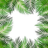 Palm Leaf Vector Background  with White Frame Illustration