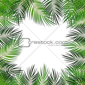 Palm Leaf Vector Background  with White Frame Illustration