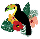 Vector Toucan Bird