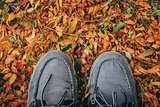 Shoes in the leaves