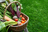 Woven basket filled with freshly harvested vegetables from an al
