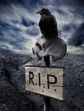 Black raven on human skull