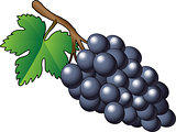 Vector purple bunch of grapes - Illustration