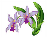 Branch of orchid flower with green leaves, Vector Illustration