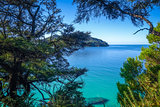 Track view in Abel Tasman National Park, New Zealand