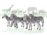 zebras in the savanna