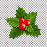 Holly Berry With Transparent Background