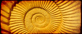 Grunge background with paper texture and ammonite shell